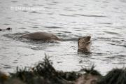 00158 Otters